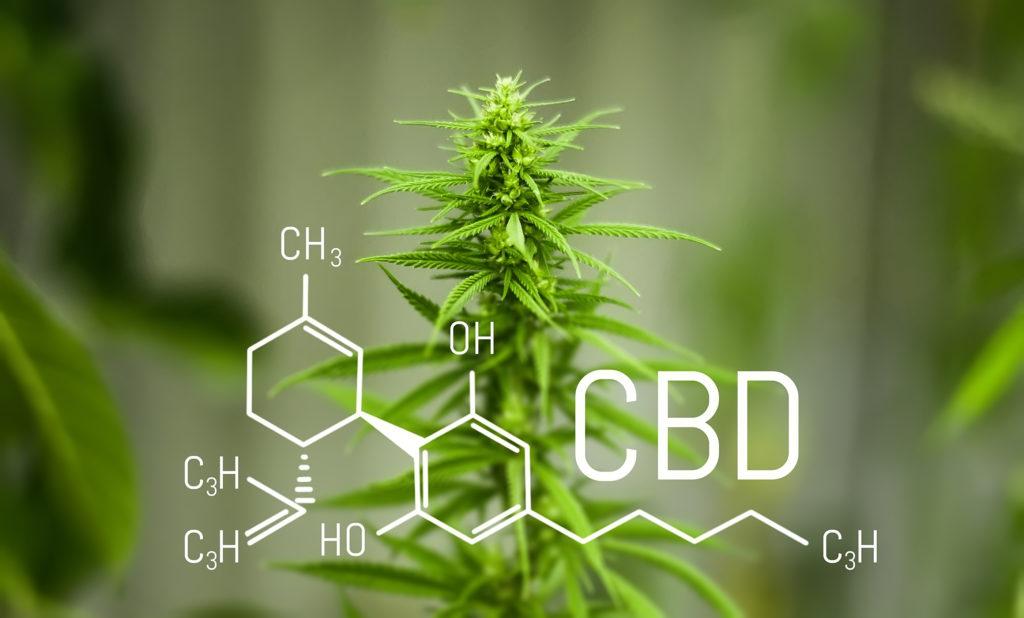 cbd at evolve cannabis company